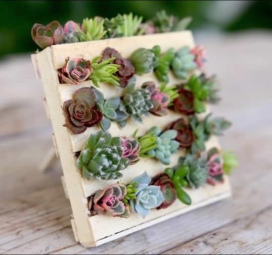 Lindo vaso de madeira com suculentas