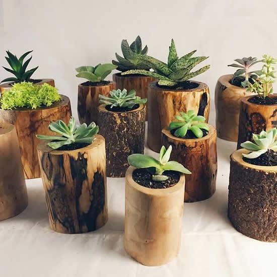 Lindos vasos de madeira com suculentas