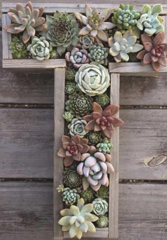 Lindo arranjo de suculentas em vasos de madeira