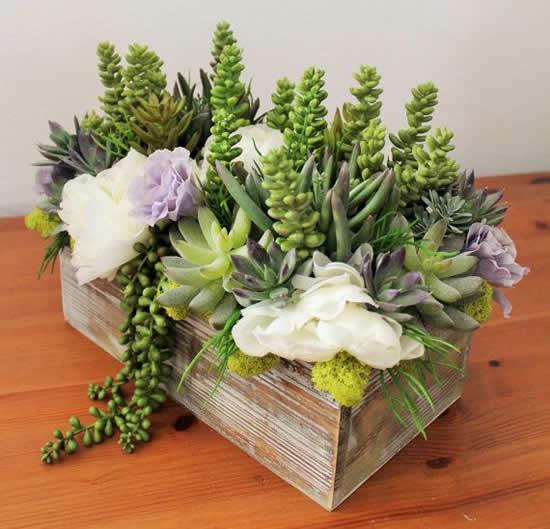 Vaso de madeira com suculenta