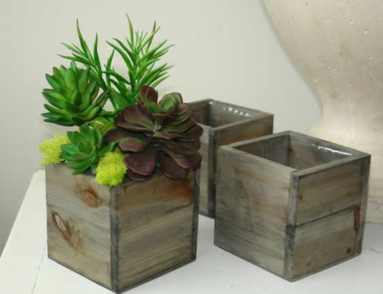 Vasos de madeira com suculentas