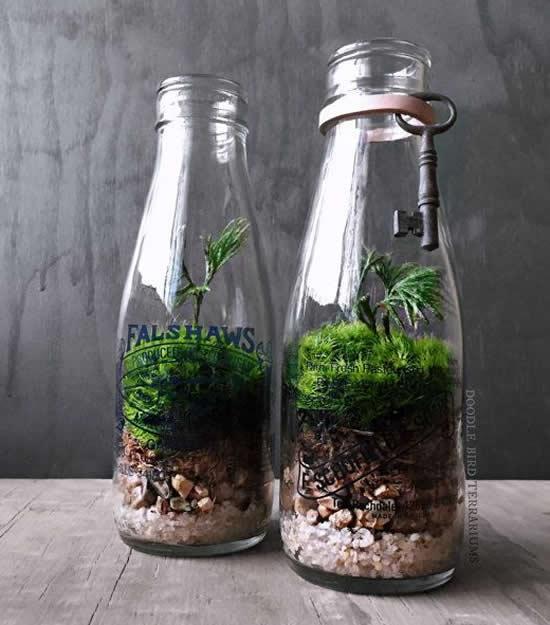Reutilize garrafas de vidro para fazer terrários