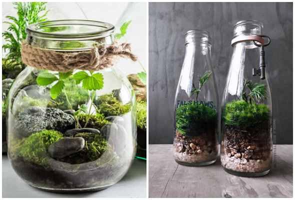 Terrários lindos com potes e garrafas de vidro