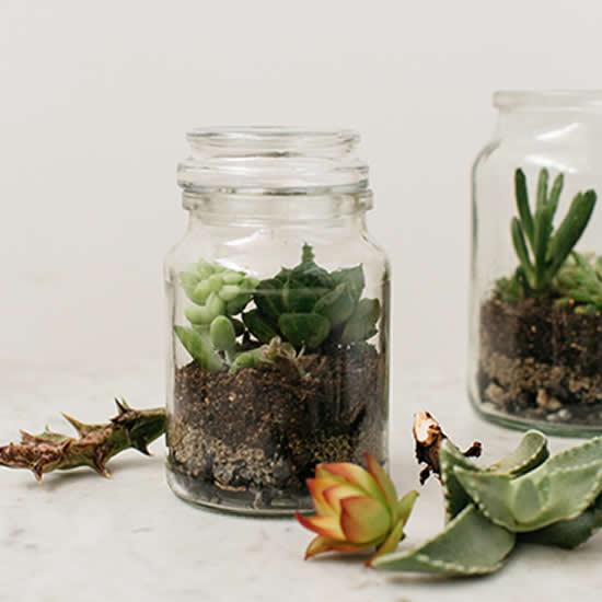 Terrários lindos com suculentas e potes de vidro