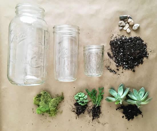 Faça terrários com suculentas e potes de vidro
