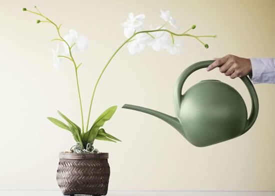 Aprenda como regar orquídeas