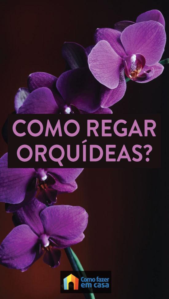 Como regar orquídeas? Dicas e segredos