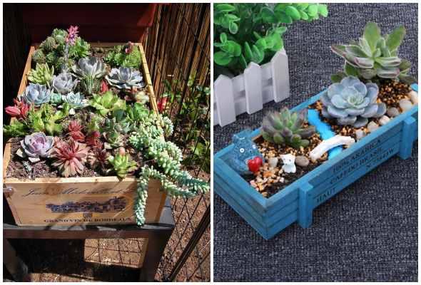 Mini jardins de suculentas em caixotes